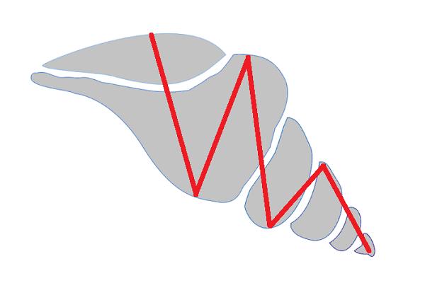 巻貝のイメージ図